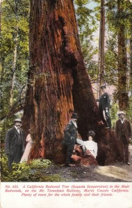 A group of visitors in Muir Woods National Monument, a virgin, old growth forest of coast redwood (Sequoia sempervirens), the tallest type of tree in the world. circa 1909. Postcard collection of Evelyn Rose.
