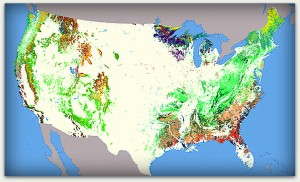 The types of forests found throughout the United States are presented in the National Atlas of Forest Cover Types map, developed from Advanced Very High Resolution Radiometer composite images during the growing season of 1991. Different colors represent the dominant tree species in each geography. Courtesy of NationalAtlas.gov, where you can also view the map's legend.