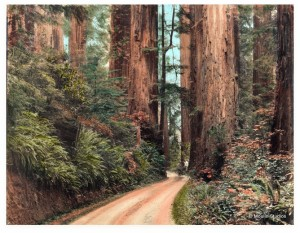 "Famed photographer Gabriel Moulin (1872-1945) became famous as the ""Redwoods Photographer,"" capturing images of the coast redwood forest all along the Northern California coast. The location  and date of this image is not yet identified, Moulin became the official photographer for the Bohemian Club beginning in 1898.  Used with permission from Jean Moulin, Moulin Studios. From the collection of Evelyn Rose."